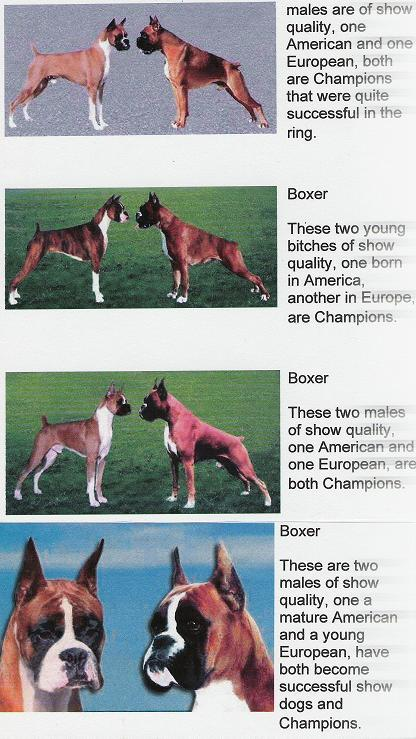 American VS European Boxers What's the Difference?